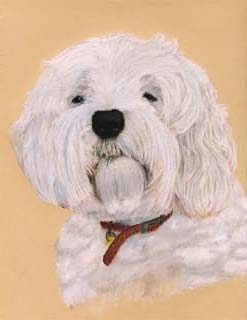 pet portrait example: coloured pencil on backing paper