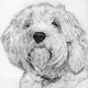Pet Portrait Gallery of various styles