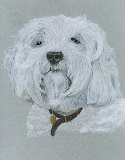 pet portrait example: charcoal
