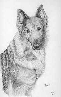 pet portrait example: graphite